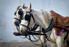 Cabezas de caballo Fotos de archivo libres de regalías