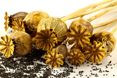 Cabezas de la amapola con las semillas Fotografía de archivo