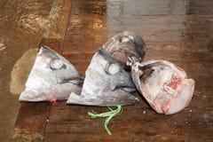Cabezas de los pescados de atún Fotos de archivo libres de regalías