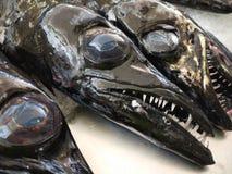 Cabezas de los pescados de la funda Imagenes de archivo