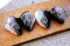 Cabezas de los pescados de la trucha Imágenes de archivo libres de regalías