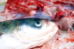 Cabezas de los pescados y carne de pescados Imagen de archivo libre de regalías