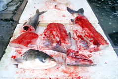 Cabezas de los pescados y carne de pescados Imagen de archivo