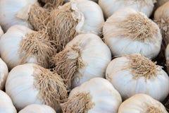 Cabezas del ajo en el mercado Fotos de archivo libres de regalías