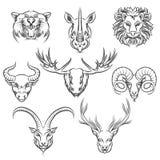 Cabezas dibujadas mano de los animales salvajes libre illustration
