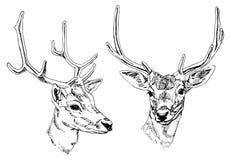 Cabezas dibujadas mano de los ciervos Imagen de archivo