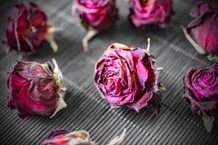 Cabezas secas de rosas púrpuras en un fondo negro Fondo oscuro con las flores Fotografía de archivo libre de regalías