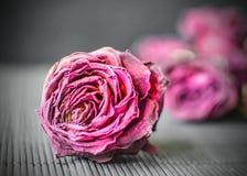 Cabezas secas de rosas púrpuras en un fondo negro Fondo oscuro con las flores Imagenes de archivo