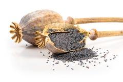 Cabezas y semillas de la amapola Imagen de archivo libre de regalías
