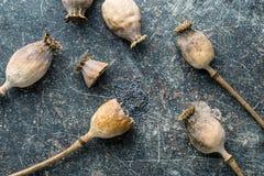 Cabezas y semillas secadas de la amapola Fotografía de archivo libre de regalías