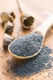 Cabezas y semillas secadas de la amapola Imagen de archivo libre de regalías