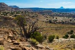 Cabezon krajobraz w pustynnych południowych zachodach Obraz Royalty Free