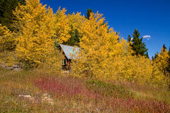 The Cabin. High up in the Colorado Rocky Mountains with Autumn Aspen colors Stock Images