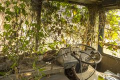 The cabin of an abandoned bus overgrown with green ivy stock images