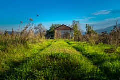 Cabin. abandoned cabin in the plain of Thessaly. Stock Images