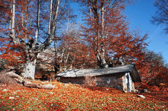 Cabin in autumn Stock Photography