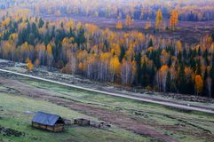 The cabin and the birches Stock Images