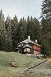 Cabin in the coniferous forest. Mountain cabin in the forest Royalty Free Stock Photos