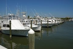 Cabin cruisers in marina. Row of white cabin cruisers moored in marina Stock Image