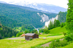 Cabin and farm animals by the Swiss alps Stock Photos