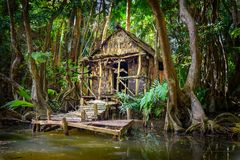 Cabin in the forest and mangrove Dominica royalty free stock photography