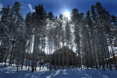 Cabin in Forest Woods Pine Trees Winter Time Covered in Snow Royalty Free Stock Photos