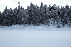Cabin in Forest Woods Pine Trees Winter Time Covered in Snow Stock Photography