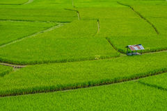 Cabin on green rice field Royalty Free Stock Image