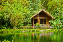 Cabin in the jungle Royalty Free Stock Photography