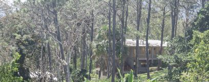 Cabin in the mountains, surrounded by pine forests dominican republic, stock image