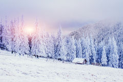 Cabin in the mountains in winter. Ukraine Royalty Free Stock Images