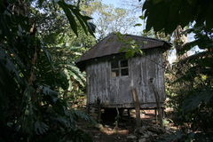 Cabin in Palenque Stock Photo