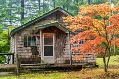 Cabin in the rain forest of Oregon Royalty Free Stock Photography