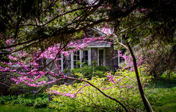 Cabin through the red bud trees Royalty Free Stock Images