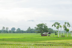 cabin in the rice fields Royalty Free Stock Photos