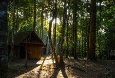 Cabin in The Wood with Sunlight Royalty Free Stock Photos