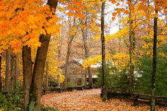 Cabin in the woods with autumn. A cabin in the woods surrounded by trees with autumn leaves royalty free stock photos
