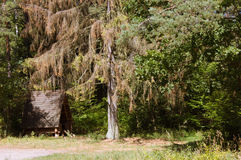 The cabin in the woods. Under a big tree royalty free stock photography