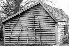 Cabina antiquata rustica con i rami che pendono contro la parete As immagine stock