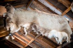 Cabina de la caza de la piel de los ciervos foto de archivo