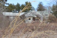 Cabina de madera vieja abandonada del cortijo demasiado grande para su edad con los árboles y las vides Imagen de archivo