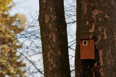 Cabina dell'uccello appesa su un albero Casa della primavera per gli uccelli Fotografie Stock