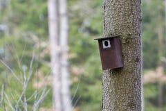 Cabina dell'uccello appesa su un albero Casa della primavera per gli uccelli Fotografia Stock