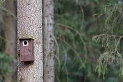 Cabina dell'uccello appesa su un albero Casa della primavera per gli uccelli Immagine Stock Libera da Diritti