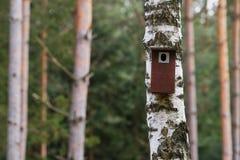 Cabina dell'uccello appesa su un albero Casa della primavera per gli uccelli Fotografie Stock Libere da Diritti