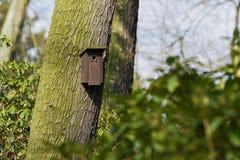 Cabina dell'uccello appesa su un albero Casa per gli uccelli Fotografie Stock Libere da Diritti