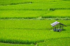 Cabina en campo verde del arroz imagen de archivo
