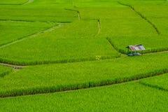 Cabina en campo verde del arroz Imagen de archivo libre de regalías