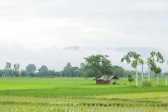 cabina en los campos del arroz fotos de archivo libres de regalías