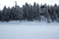 Cabina nel tempo di Forest Woods Pine Trees Winter coperto in neve Fotografia Stock